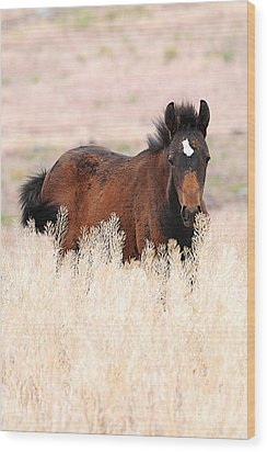 Wood Print featuring the photograph Mustang Colt In The Grasses by Vinnie Oakes