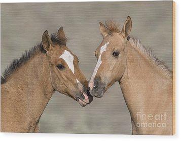 Mustang Foals Wood Print by JeanLouis Klein and MarieLuce Hubert
