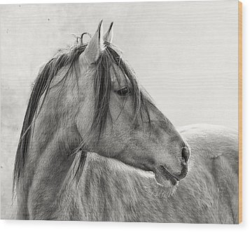 Mustang Wood Print by Ron  McGinnis