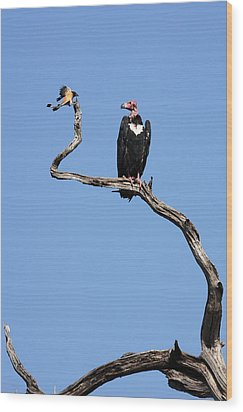 Mutual Admiration Wood Print by Fotosas Photography