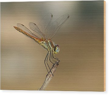 My Best Dragonfly Wood Print by Janina  Suuronen