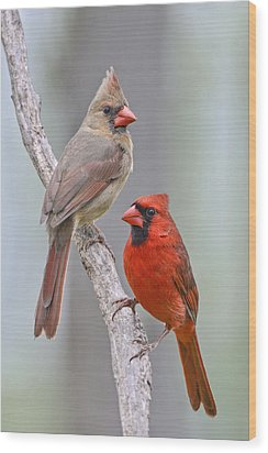My Cardinal Neighbors Wood Print