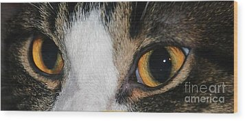 My Cat Is The Cat Of All Cats Wood Print by PainterArtist FIN