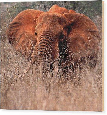 My Elephant In Africa Wood Print