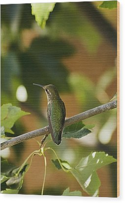 My Green Colored Hummingbird 4 Wood Print