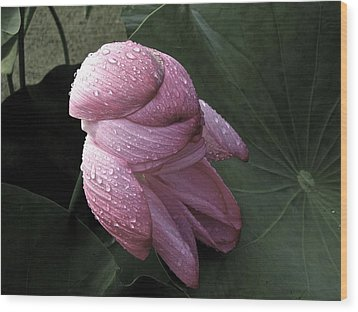 My Lotus My Love Wood Print by Larry Knipfing
