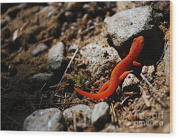 My Name Is Ned The Newt Wood Print by Susan Hernandez