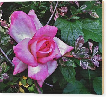 Wood Print featuring the photograph My Perfect Tea Rose by VLee Watson