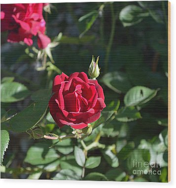 My Red Rose Wood Print by Alys Caviness-Gober