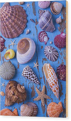My Shell Collection Wood Print by Garry Gay