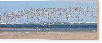 My Tern Wood Print by Bill Wakeley