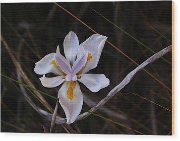 My Wild Iris Rose Wood Print by Debbie May