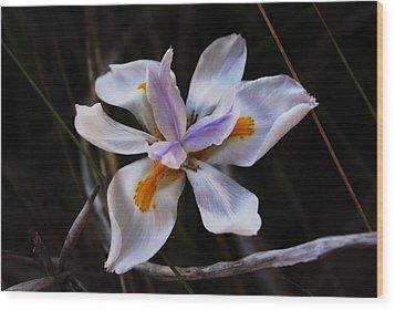 My Wild Iris Rose Too Wood Print by Debbie May