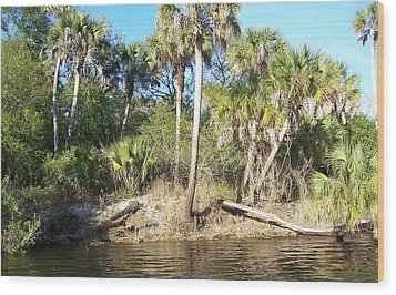 Wood Print featuring the photograph Myakka River by John Mathews