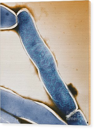 Mycobacterium Leprae Tem Wood Print by Kwangshin Kim
