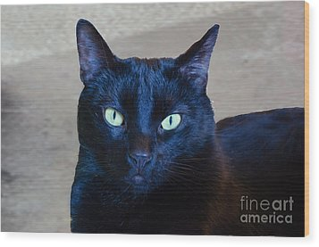 Mysterious Black Cat Wood Print by Luther Fine Art