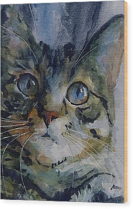 Mystery Tabby Wood Print by Paul Lovering