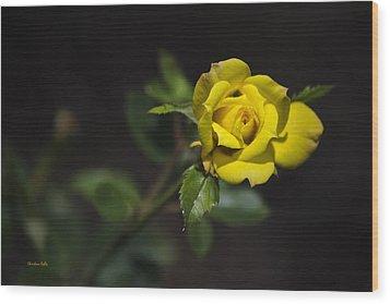 Mystic Yellow Rose Wood Print by Christina Rollo
