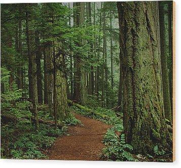 Mystical Path Wood Print by Randy Hall