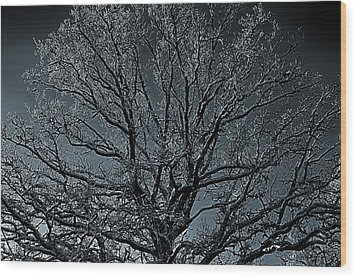 Mystical Tree Wood Print