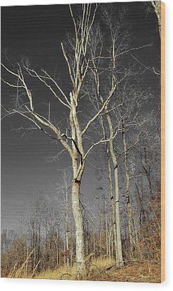 Wood Print featuring the photograph Naked Branches by Linda Segerson