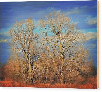Naked Branches Wood Print by Marty Koch
