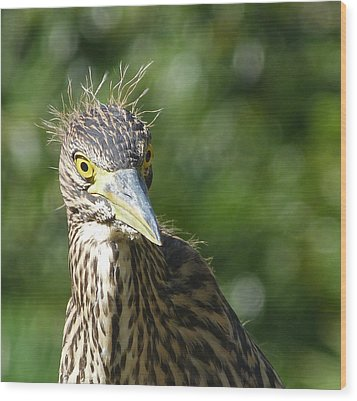 Nankeen Night Heron Junior Wood Print by Margaret Saheed