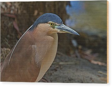 Nankeen Or Rufous Night Heron Wood Print by Mr Bennett Kent