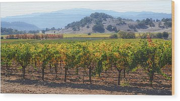 Napa Valley California Vineyard In Fall Autumn Wood Print
