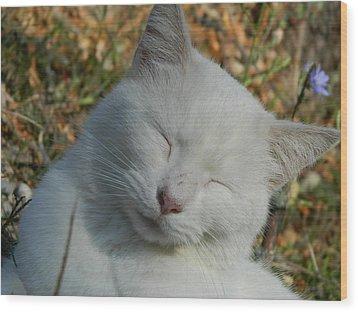 Napping Barn Cat Wood Print by Kathy Barney