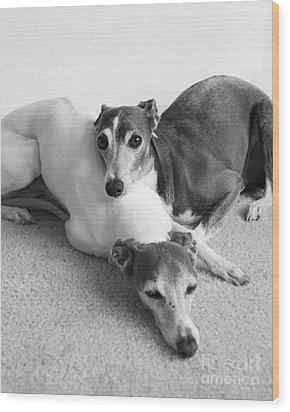 Napping Greyhounds Wood Print by Kate Sumners