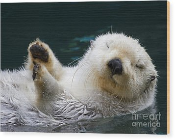Napping On The Water Wood Print by Mike  Dawson