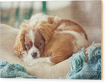 Napping Puppy Wood Print