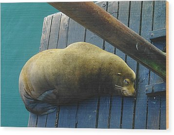 Napping Sea Lion Wood Print by Jeff Swan