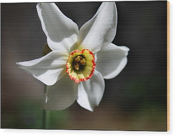Narcissus II Wood Print by Aya Murrells