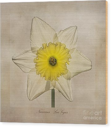 Narcissus Las Vegas Wood Print by John Edwards