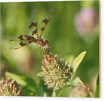 Wood Print featuring the photograph Nashoba Winery Dragonfly by John Hoey