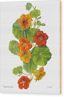 Nasturtiums - Tropaeolum Majus  Wood Print