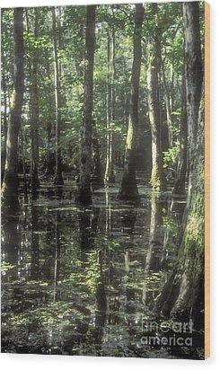 Natchez Trace Cypress Wood Print by Bob Phillips
