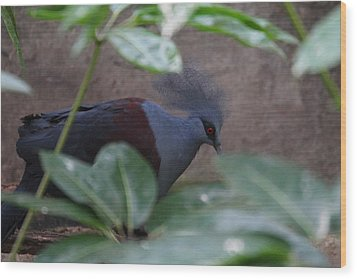 National Zoo - Birds - 011329 Wood Print by DC Photographer