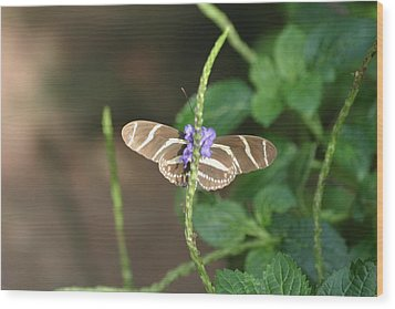 National Zoo - Butterfly - 12122 Wood Print by DC Photographer