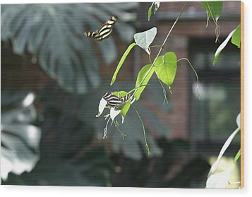 National Zoo - Butterfly - 12123 Wood Print by DC Photographer