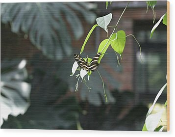 National Zoo - Butterfly - 12124 Wood Print by DC Photographer