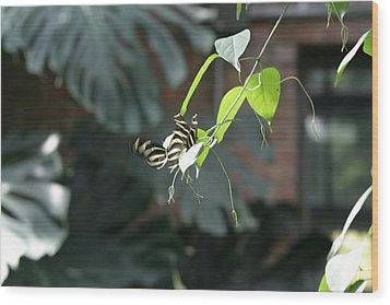 National Zoo - Butterfly - 12125 Wood Print by DC Photographer