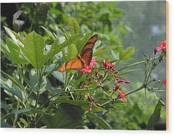 National Zoo - Butterfly - 12126 Wood Print by DC Photographer