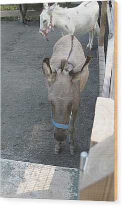 National Zoo - Donkey - 12127 Wood Print by DC Photographer