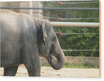 National Zoo - Elephant - 121212 Wood Print by DC Photographer