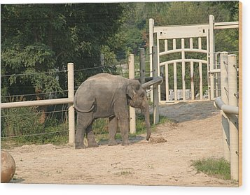 National Zoo - Elephant - 12127 Wood Print by DC Photographer