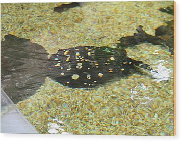 National Zoo - Fish - 01138 Wood Print by DC Photographer