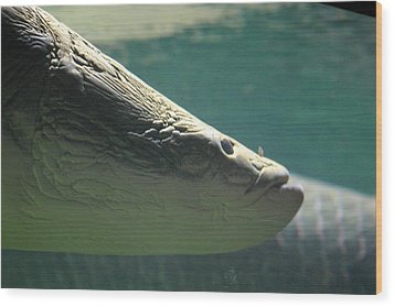 National Zoo - Fish - 12122 Wood Print by DC Photographer